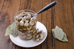 Snails on wood table. Stock Images