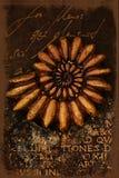 Snailshell de collage Photos libres de droits