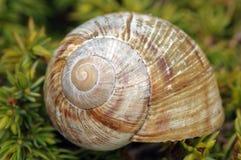 Snailshell vacío Fotos de archivo