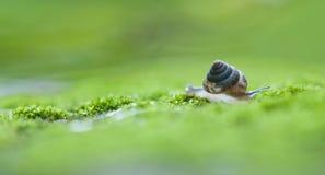 snailspår Arkivbilder