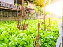Snak het behandelde traditionele Thaise materiaal van de fruitplukker dichtbij de rivier en waterhyacintzonsondergang stock fotografie
