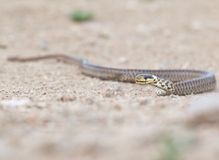 The snake Stock Images