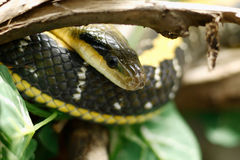 Snake. On a tree branch stock photo