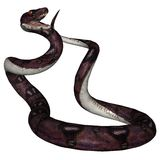Snake. 3D rendered snake on white background isolated Royalty Free Stock Photography