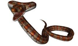 Snake Royalty Free Stock Photos