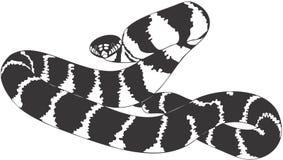 Snake. Smooth high resolution illustration of snake Stock Photos