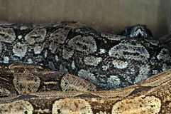 Snake-16 Stock Photos