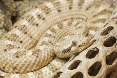 Snake Stock Photography