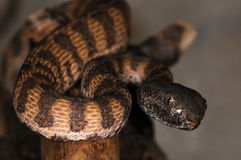 Snake-2 Stock Images