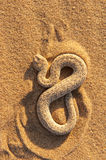 Snake 2 Royalty Free Stock Photography