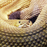 Snake. Big snake is living in the wilderness Stock Photo