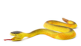 Snake. Toy snake on a white background Stock Image