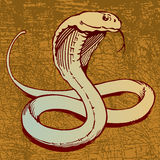 Snake. An illustration of a Cobra Snake Royalty Free Stock Image