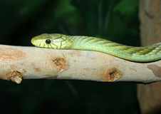 Snake Stock Photography