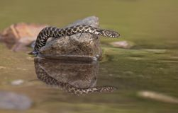 The snake. On the stone Stock Images