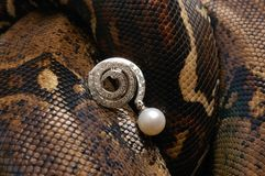 Snake. Brown snake with modern jewelrys 11 Royalty Free Stock Image