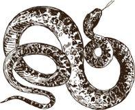 Snake. Vector image of a big tropical snake Royalty Free Stock Photos