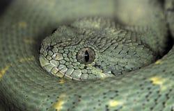 Snake-45 Stock Photo