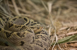 Snake. Beautiful image of the snake royalty free stock images