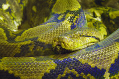 Snake. In zoo stock images