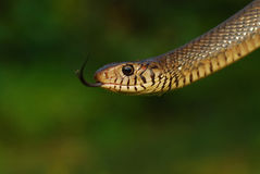 Snake Stock Images