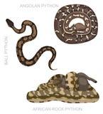 Snake African Python Set Cartoon Vector Illustration Royalty Free Stock Images