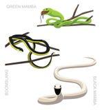 Snake African Venomous Set Cartoon Vector Illustration. Animal Cartoon EPS10 File Format Stock Photos