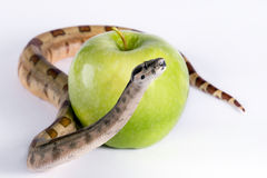 Snake and apple Stock Images