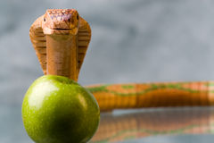 Snake and apple. Cobra of wood and prohibited apple Stock Image