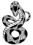 Snake attacke Royalty Free Stock Photo