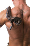 Snake on Back and Shoulder of Naked Muscular Man Royalty Free Stock Images