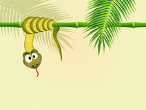 Snake on bamboo Stock Images