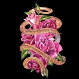 Snake with beautiful garden roses. Compositions of red and pink roses, watercolor illustration. Printing use t-shirt. Snake with beautiful garden roses stock image