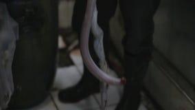 snake blood wine shop, jakarta, indonesia stock video footage