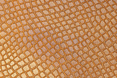 Snake brown leather Stock Photos