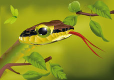 Snake and the butterfly. Animal asia Stock Photos