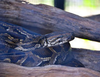 Snake in cage Royalty Free Stock Photography