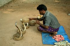 Snake charmer. In Kochin, Kerala (South India), playing the flute and putting the first snake back into its basket Stock Photo