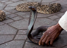 Snake Charmer handling a cobra. In marrakesh Royalty Free Stock Photos