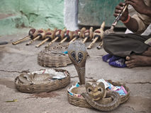Snake charmer in India. Cobra in basket stands up above charmer Stock Photo