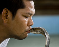 Snake Charmer. A snake charmer kissing a King Cobra at one of the snake farms in Phuket, Thailand Stock Images