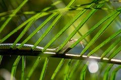 Snake (Chrysopelea ornata) on a tree Royalty Free Stock Photos