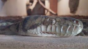 Snake. Close up snake eye beauty cold royalty free stock photos