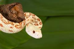 Snake closeup Stock Image