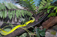 Snake coiled on a branch Stock Images