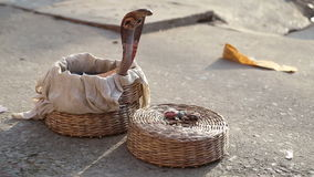 Snake coming out from a basket at street in Varanasi. stock video