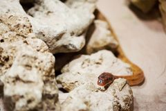 Snake crawling on a stone Royalty Free Stock Photo