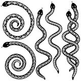 Snake designs. Set of editable  snakes designs black and white Royalty Free Stock Photos