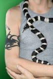 Snake draped around man's neck Stock Image
