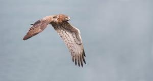 Free Snake Eagle Stock Photo - 23228280